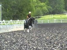 Uta Gräf // Graf & Le Noir - bitless riding May 2011. Le Noir born 2000 black Holstein stallion by Leandro x Caletto I and his rider Uta Gräf at home training some Grand Prix movements with bitless bridle.