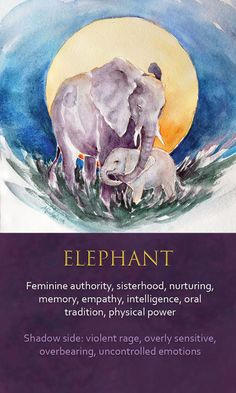 The elephant is a graceful, giving friend you should mightily support, but be gentle and soft so as not to disturb as waking monster. Elephant Spirit Animal, Elephant Quotes, Spirit Animal Totem, Animal Spirit Guides, Your Spirit Animal, Elephant Love, Elephant Art, African Elephant, Animal Meanings