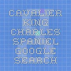 cavalier king charles spaniel - Google Search