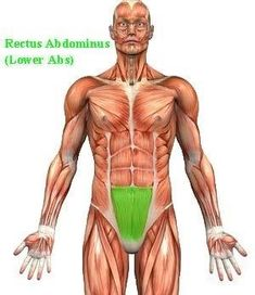 Best Lower Ab Workout - Read, watch Exercise Videos to Lose Tummy Fat