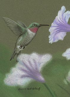 flowers for hummingbirds - Bing Images