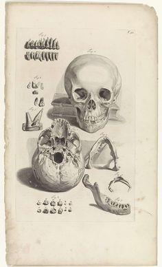 Pieter van Gunst | Anatomische studie van een schedel en de kaak, Pieter van Gunst, Gerard de Lairesse, weduwe Joannes van Someren, 1685 | Anatomische studie van de voorkant van de schedel, de kaak en de tanden. Bovenaan rechts genummerd T. 91.