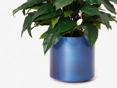 Metallic Finish Floor Planters from Indoor Flower Pots