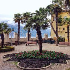 #Repost @ailuah  Im Palmengarten des Palazzo dei Capitani in Malcesine // The palm garden of the Palazzo dei Capitani at Malcesine. #lake #lagodigarda #lakegarda #lakegardaphotography #gardasee #instagarda #italy #italien #malcesine @lake_garda #photoGC