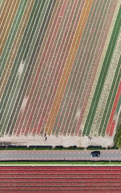 1160 best Drones images on Pinterest   Aerial photography  Aerial     Bernhard Lang aerial shots of Tulip fields  Licenced for Observer New  Review only  Clear