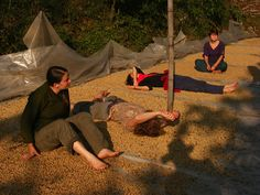 Volunteers from all over the world rotating and drying coffee beans for eventual distribution (for Everest Coffee) to roasters around the world.