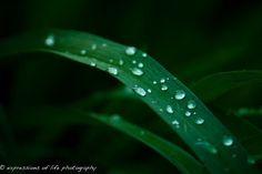 April 12 April Showers....jpg by expressions of life photography, via Flickr