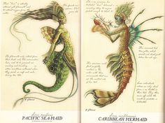 shout out to the spiderwick chronicles for having the best fictional mermaid design best design Mythical Creatures Art, Mythological Creatures, Magical Creatures, Fantasy Creatures, Hogwarts, Spiderwick, Arte Sailor Moon, Legends And Myths, Mermaid Art