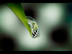 MACRO PHOTOGRAPHY TUTORIAL - 5 Tips For Water Drop Refraction