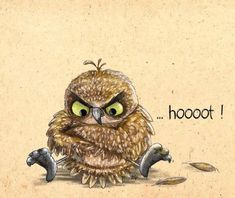 Me: The grumpy owl doesnt give a hoot! Owl: But. Owl Photos, Owl Pictures, Betty Boo, Owl Always Love You, Beautiful Owl, Wise Owl, Owl Bird, Tier Fotos, Bird Illustration