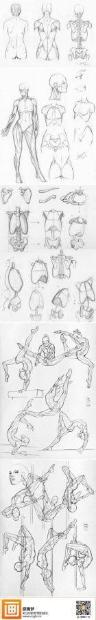 dibujo anatomia del cuerpo 2