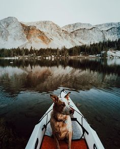 Puppies on adventures. (=