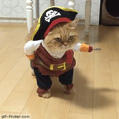 Cat's owners win the Internet gold with brilliant and completely hilarious pirate cat costume video. Inspiration for cat lovers this Halloween? Cute Kittens, Cats And Kittens, Big Cats, Cute Funny Animals, Funny Animal Pictures, Funny Cute, Costume Chat, Pet Costumes, Halloween Costumes