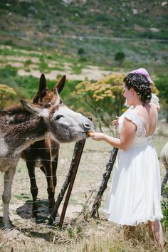 Posing with the donkeys is a definite country wedding must Photo credit: Dear Heart Country Wedding Inspiration, Girls Dresses, Flower Girl Dresses, The Donkey, Donkeys, Weddingideas, Photo Credit, Poses, Wedding Dresses