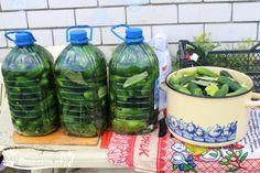 Astăzi vă propunem o metodă total diferită de a mura castraveți, pentru care nu aveți nevoie de recipiente de sticlă, e suficient să aveți acasă câteva sticle de plastic de 5 l. Această rețetă simplă este pentru gospodinele lenoase. Castraveții murați în buteliile de plastic sunt la gust exact ca cei murați în butoi. INGREDIENTE: 3 kg de castraveți; 330 gr de sare gemă (neiodată); apă filtrată; flori de mărar; frunze de coacăză neagră, vișin și hrean; rădăcină de hrean (opțional); 2 căpățâne… Bolet, Kimchi, Pickles, Cucumber, Watermelon, Beverages, Water Bottle, Easy Meals, Fruit