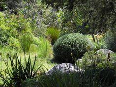 Landscape Design Melbourne   Sandra McMahon Gardenscape design: native plants respond as well as Box to clipping and shaping! Australian Garden Design, Australian Native Garden, Landscape Design Melbourne, Vegetable Garden, Garden Plants, Garden Inspiration, Garden Ideas, Prairie Planting, Native Gardens