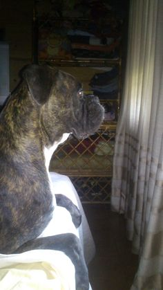 Mirando por la ventana. #Rocco