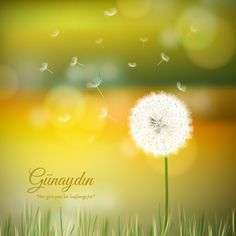 Güzel bir haftaya mutlu başlamanız dileğiyle, Günaydın! #turuncukasa #mutlu #pazartesi #günaydın #indirim #renk