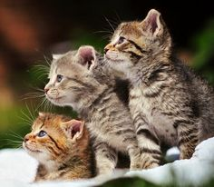 How cute are these three? Super cute if you ask me!