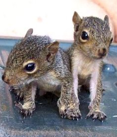 Baby squirrels.