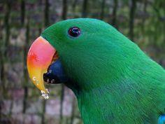 parrot-406664_1920