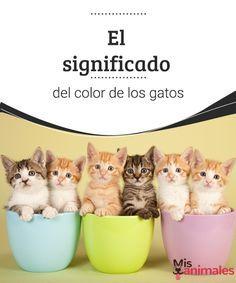 El significado del color de los gatos - Mis animales Los gatos tienen una colorida variedad, a continuación les contamos un poco sobre el significado del color de los gatos.