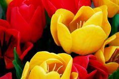 LAS MEJORES IMÁGENES GRATIS: Flores