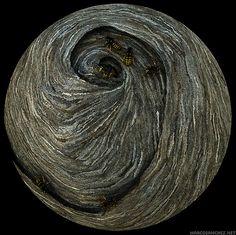 Yellowjacket nest | by Marco Sanchez