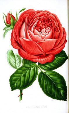 25 Free Printable Vintage Floral Images | Remodelaholic | Bloglovin'