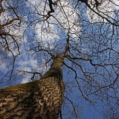Taking some time to look up whilst in the #woods what's your view when you #lookup ?  #Bushcraftcourse #oxfordshire #Nature  #bushcraft #bushcrafting #bushcraftuk #survival #wildernesspioneers #Oxford #getoutside #getoutdoors