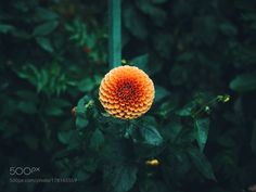 I am not alone. by nickverbelchuk. Please Like http://fb.me/go4photos and Follow @go4fotos Thank You. :-)