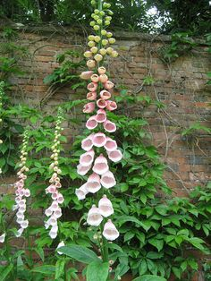 Upton Manor , The Cotswolds I fell in love with foxglove in England. But they don't do nearly as well in Arizona! Cottage Garden Plants, Pink Garden, Cottage Gardens, Beautiful Gardens, Beautiful Flowers, English Garden Design, English Country Gardens, My Secret Garden, Farm Gardens