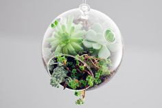 Little Hanging Possum / Botany Factory - Terrariums by Katie Goldman Macdonald