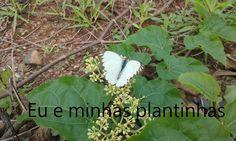 http://eueminhasplantinhas.blogspot.com.br/2016/03/rega.html#comment-form
