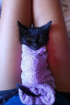 Cute Cats : This is so warm Kittens Cutest, Cute Cats, Funny Animals, Cute Animals, Kitty Images, Funny Cat Pictures, Funny Cute, Towel, Creatures