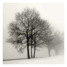 Winter Grove by Ilona Wellman