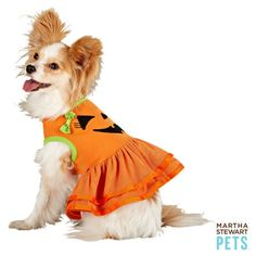 Martha Stewart Pets Pumpkin Costume Dress-Preview: Halloween Costumes for Dogs