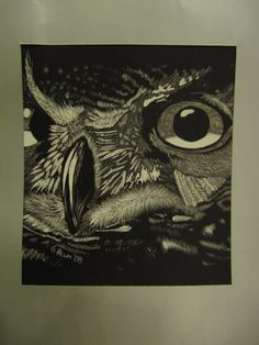 up close owl drawing  white charcoal on black paper