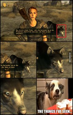 She has seen things; things that would make a normal dog go mad. She has seen things; things that would make a normal dog go mad. Video Game Memes, Video Games Funny, Funny Games, Fallout Funny, Fallout Fan Art, Fallout Tips, Funny Gaming Memes, Gamer Humor, Fanart