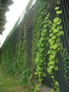 Green Roof Research Green Architecture, Architecture Design, Green Facade, Vertical Garden Design, Walled Garden, Exterior, Plant Wall, Green Building, Garden Inspiration