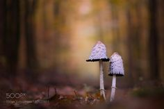forest path by fotissima. @go4fotos
