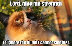 Funny pictures about Grumpy Cat is waiting for the day. Oh, and cool pics about Grumpy Cat is waiting for the day. Also, Grumpy Cat is waiting for the day. Grumpy Cat Quotes, Grumpy Cat Humor, Cat Memes, Cats Humor, Cute Cats, Funny Cats, Funny Animals, Cute Animals, Crazy Animals