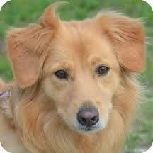This is a verrrrryyyyyy cutie dogy!!!!!!!