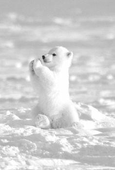 baby bear..