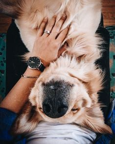 The Versatile Golden Retriever - Champion Dogs Cute Puppies, Cute Dogs, Dogs And Puppies, Animals And Pets, Baby Animals, Cute Animals, Yorkies, Cute Creatures, Dog Pictures