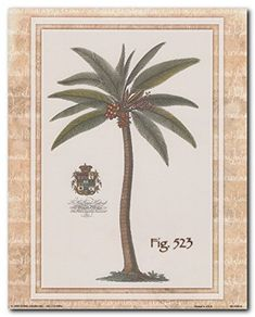 Get appreciated for your unique taste in home decor by getting home this tropical vintage palm tree art print poster. It will surely help you to bring nice change into your decor pattern and enhance your home decor instantly. This gorgeous poster brings you many compliments from your guests. It would make a great gift for any nature lover. Grab this wonderful piece of art for its high quality gloss finish paper and perfect color accuracy.