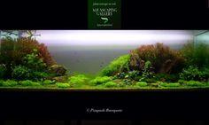 #aquascapingland