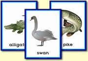 River and Lake Animal Resources