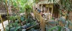 Overnachten in Jungje Dome in een Jungle Lodge - Center Parcs