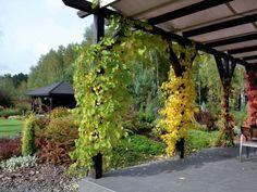 Ogród dekoracyjny przez cały rok - wizyta w ogrodzie